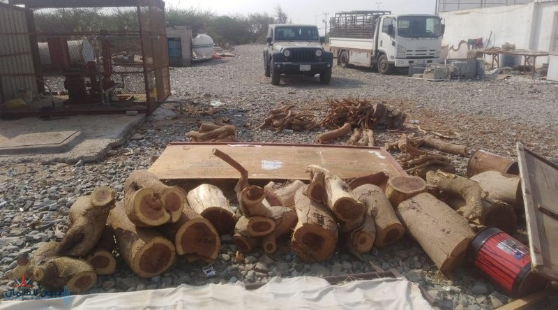 """""""البيئة"""" تصادر 150 طنًّا من الحطب المحلي في 5 مناطق"""