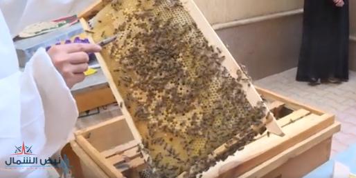 """""""البيئة"""" تحتفي بتخريج الدفعة الأولى في برنامج تربية النحل"""