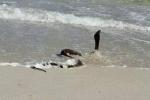 شاهد بالصور أخطر شاطئ في العالم