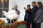 """أوباما يعفو عن الديك الرومي """"تشيز"""" .. فيديو"""