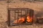 """محكمة سراة عبيدة تحكم بالسجن والجلد على المتورطين """" بحرق الثعلب """""""