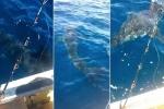 فيديو: سمكة قرش عملاقة تهاجم قارب صيد