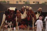 المنسوجات اليدوية تجذب زوار مهرجان العيد بطبرجل