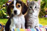 تنقل 3 أمراض خطيرة.. أستاذ مسرطنات يحذر من تربية القطط والكلاب